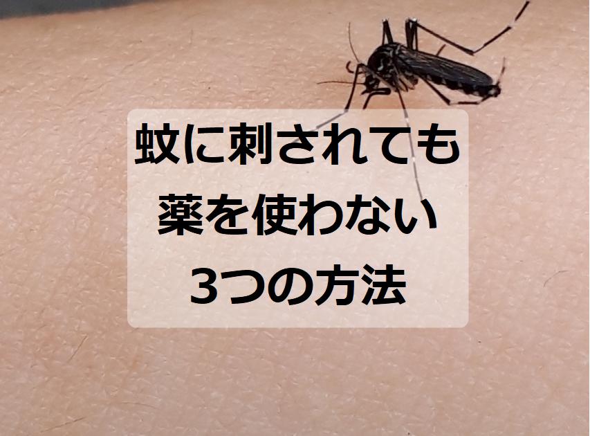 蚊に刺されても薬を使わない方法